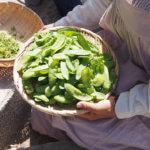 旬のお野菜(給食)